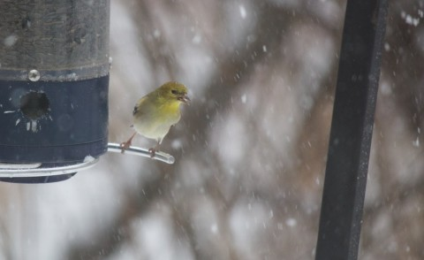 February. Outside my study window.